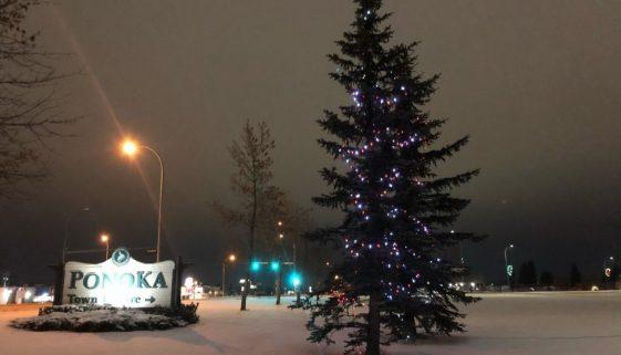 panoka-christmas-lights-2
